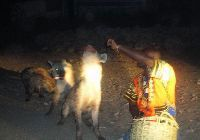 The Hyena Man in Harar
